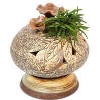 도자기풍란 (보급종 풍란)