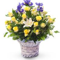 노랑장미 꽃바구니