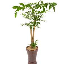 행복나무(해피트리)25%할인가