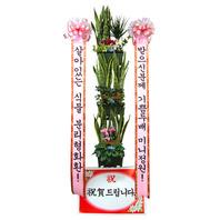 분리형 미니정원 식물//3~4일전 예약상품