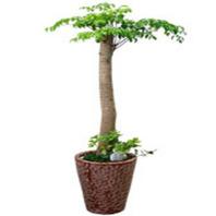 행복나무목대 칼라분