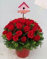 장미꽃 화분스타일