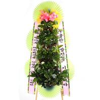 그린식물포트식화환-행사후꽃화분제공