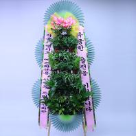 그린식물 포트식화환6