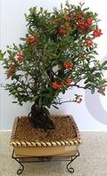 피라칸샤스(가을,겨울상품)