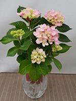 수국 꽃병