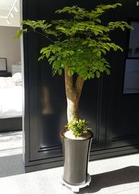 행복나무가지목대(배송상품)