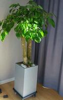 행복나무(해피트리)사각분