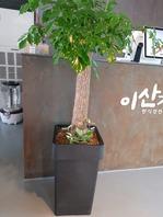 행복나무(배송상품)