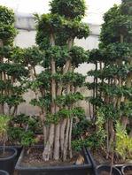 키큰 가지마루 모듬