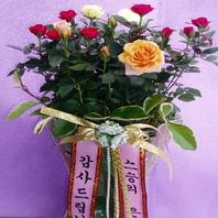 장미화분마불)♥어버이날/스승의날선물/