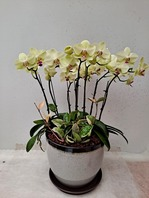 포춘 꽃8대
