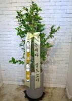 동백나무 시멘분(겨울상품)