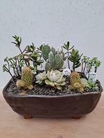 다육식물 모듬세트