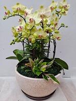 포춘 꽃6대 소품